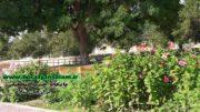 شهردار برازجان خبر داد: احداث یا اجرای طرح توسعهی ۲۰ پارک و فضای سبز طی ۲/۵ سال در برازجان