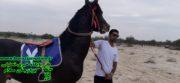 به احترام شهادت سردار سلیمانی و سه روز عزای عمومی مسابقات اسب سواری وحدتیه تا اطلاع ثانوی لغو شد .
