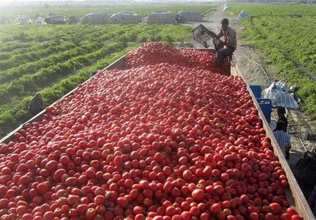 کشاورزان استان بوشهر محصولات خود را بیمه کنند