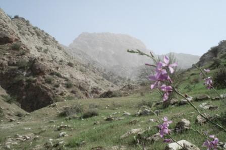 """آتش به جان کوههای """"باخ تاژ"""" دشتستان افتاد"""