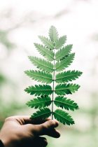 گیاهایی که توی خونتون اگه باشن ، معجزه میکنن